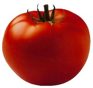 http://www.sallybernstein.com/food/columns/lydecker/tomato_lydecker.jpg